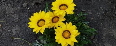Kwiaty i... żaba w ogrodzie Tadeusza Czerniewskiego