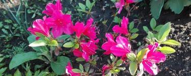 Raz jeszcze wiosna i kwiaty